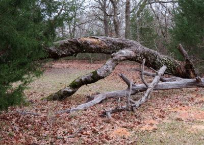 Fallen-tree-wide