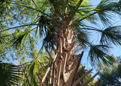 Palm-tree-close-up