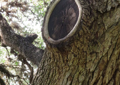 Tree-Knot