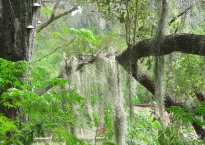 Trees-Moss