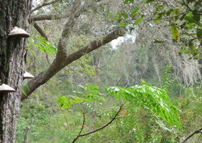 central-Florida-jungle-wide