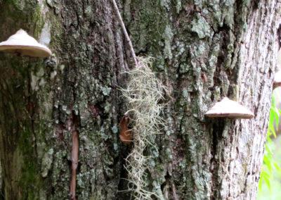 mushroom-tree-wide