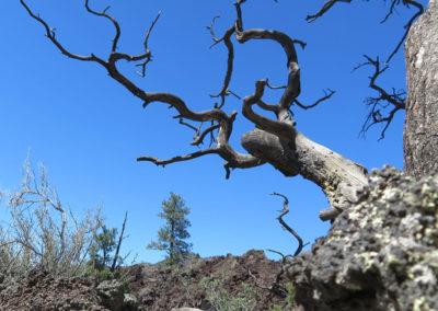 tree-diagonal