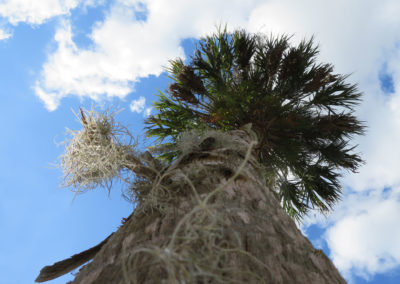 up-a-palm-tree-florida
