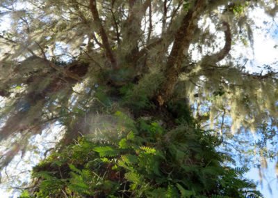 up-a-tree-florida