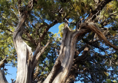 up-a-twisted-tree-wide
